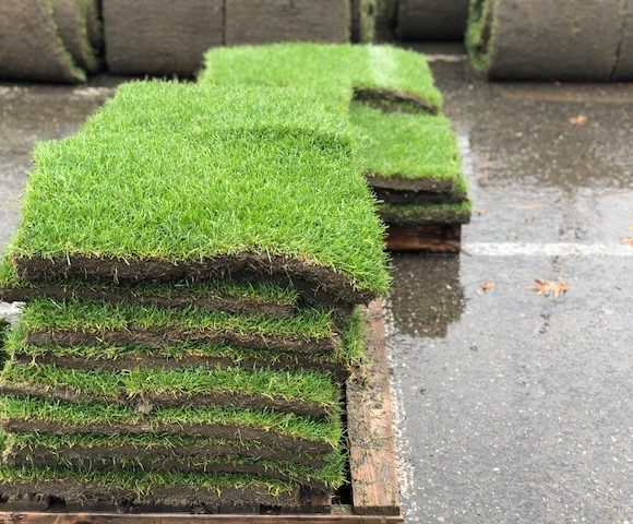 Sod For A Cause - We R Tacoma
